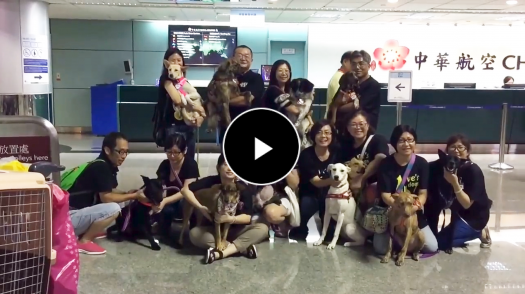 Adopting Stray Dogs from Taiwan to Loving Homes Overseas
